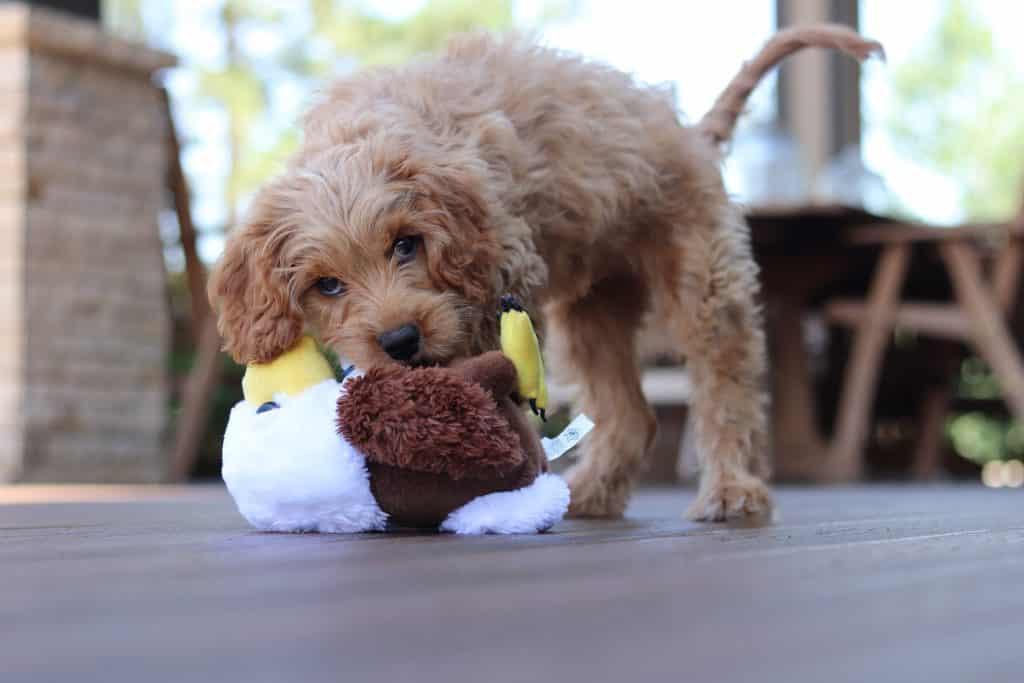 dog toys6