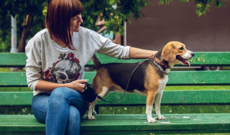 The best training leashes for dogs on the market