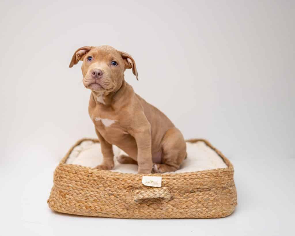 dog bed (2)