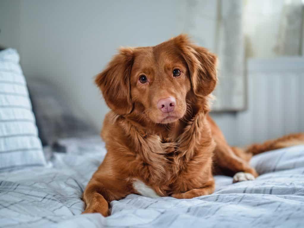 dog bed (3)
