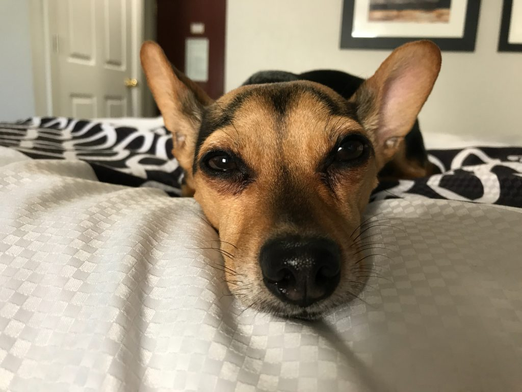 dog bed (5)