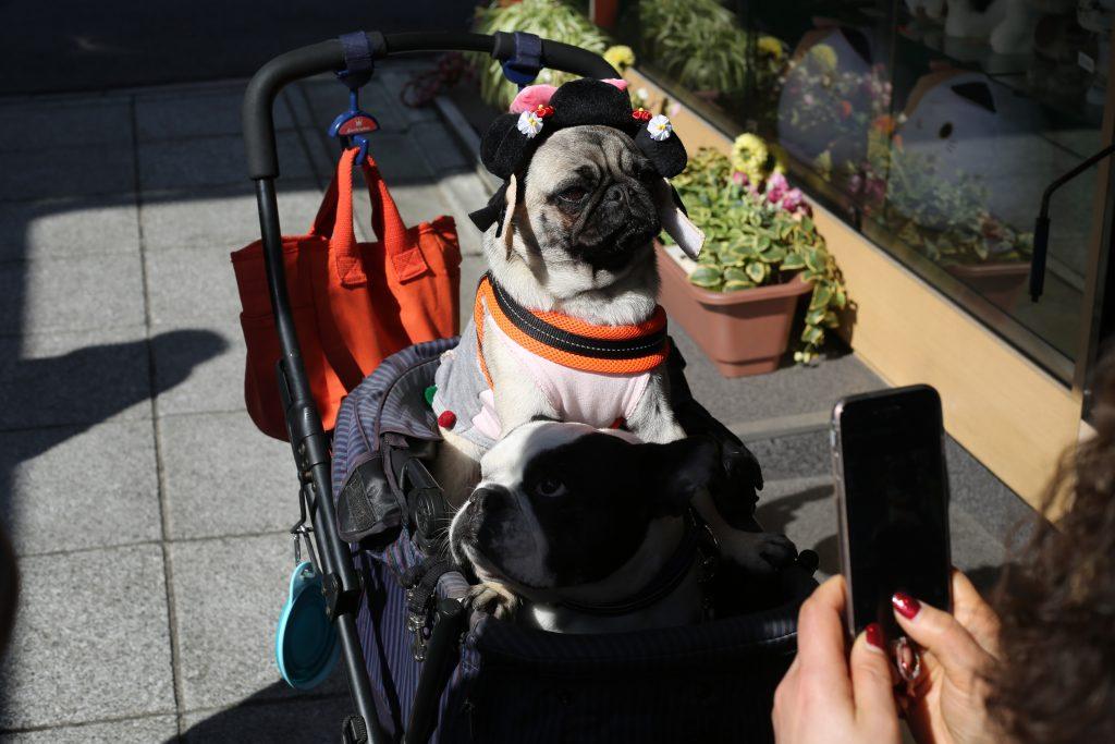 dog cart (3)
