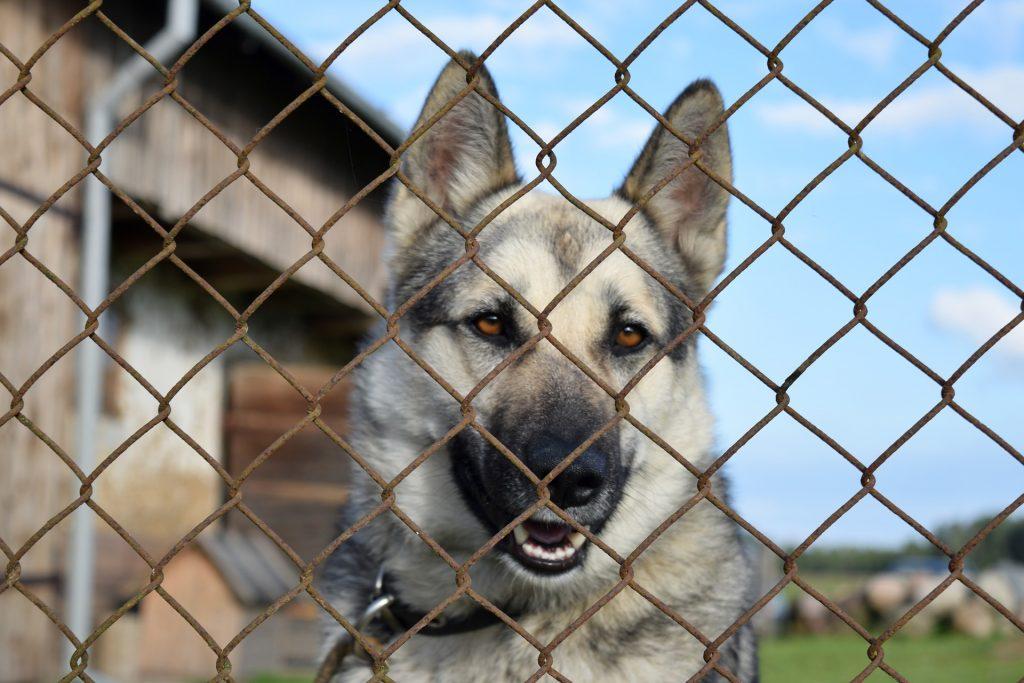 dog gated