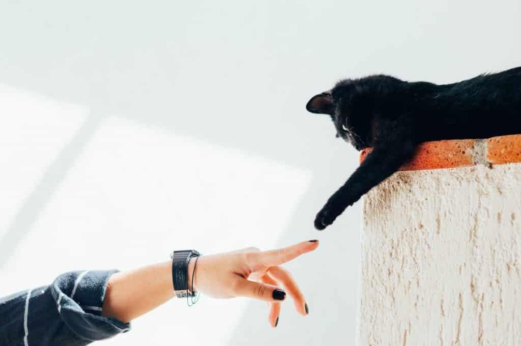 Easy tips for Raising cats