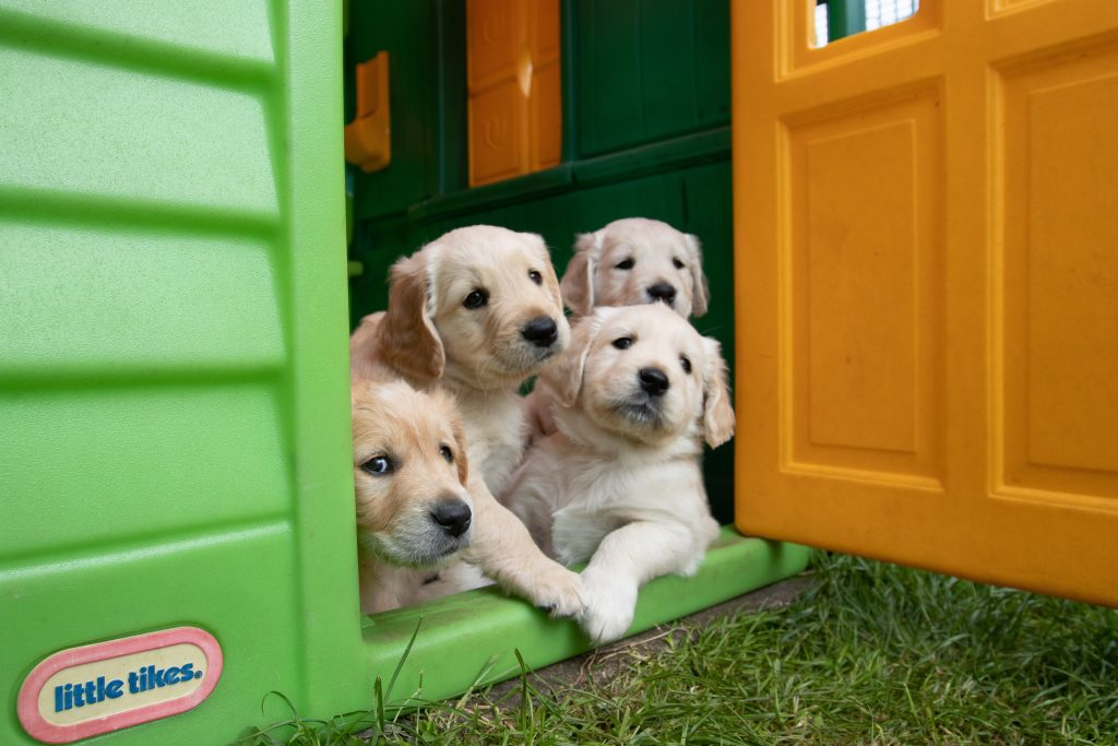 bunch of puppies
