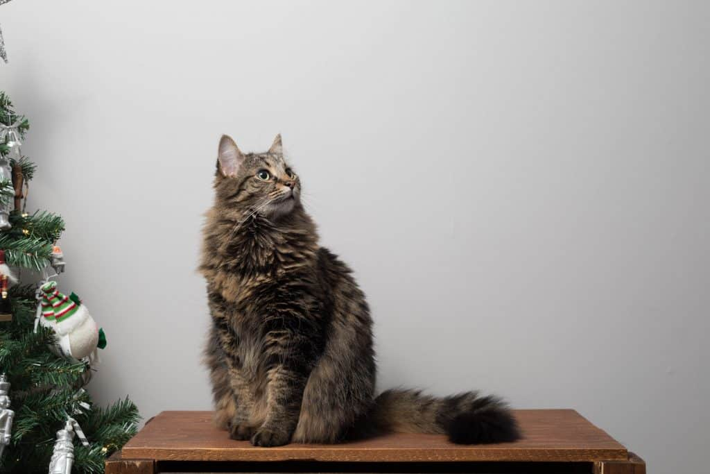 Why cat health insurance is important?