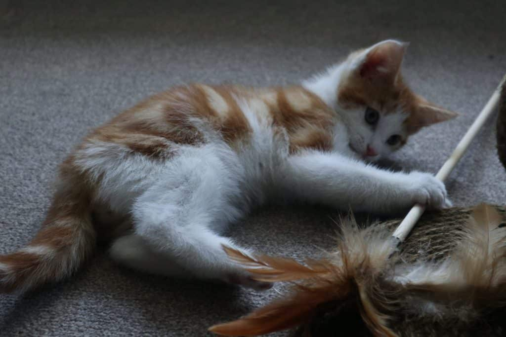 Cat toys – this is how you keep your velvet paw on the go