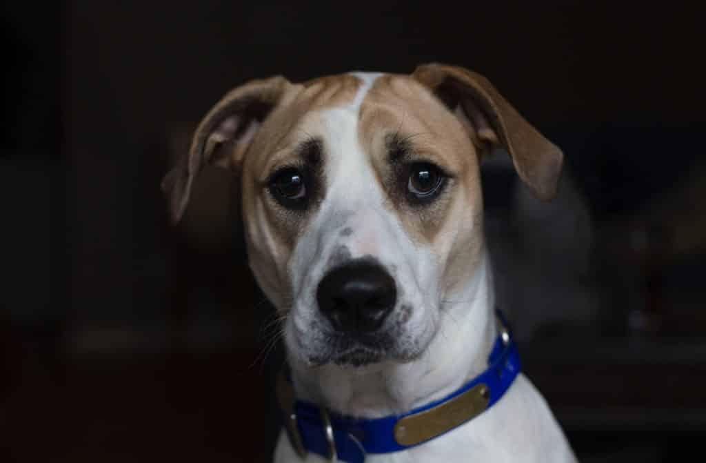 dog looking worried