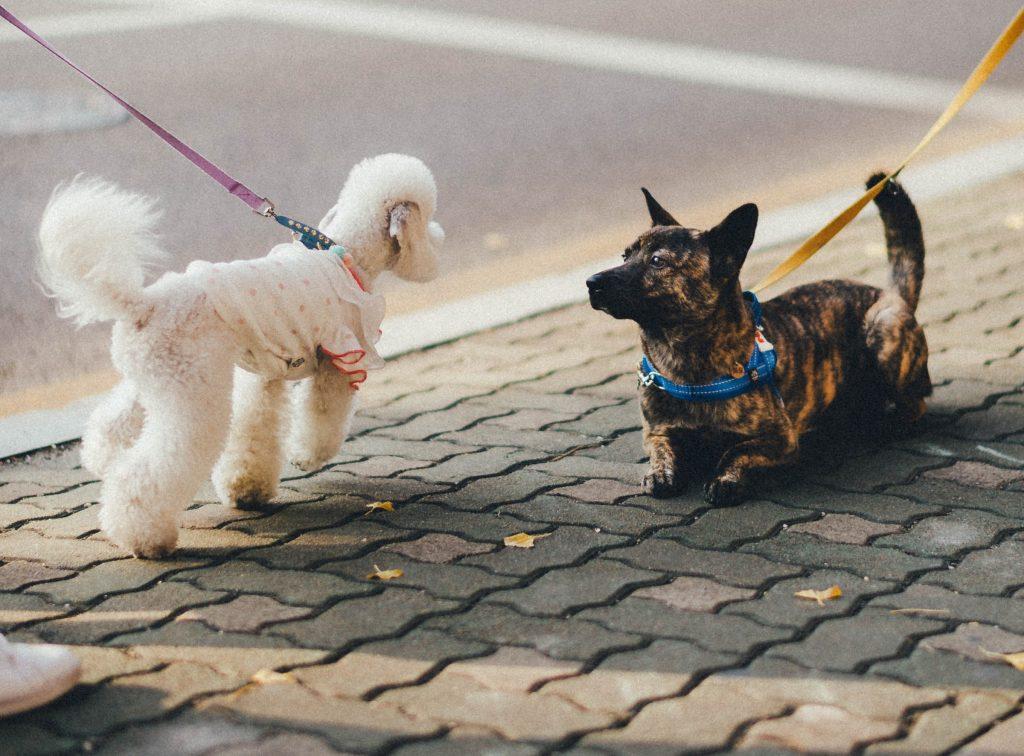 dog leash 4