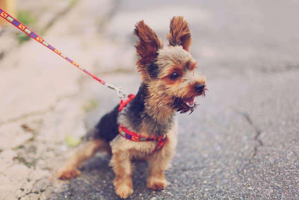 dog leash3