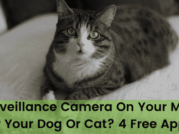 A Surveillance Camera On Your Mobile For Your Dog Or Cat 4 Free Apps!