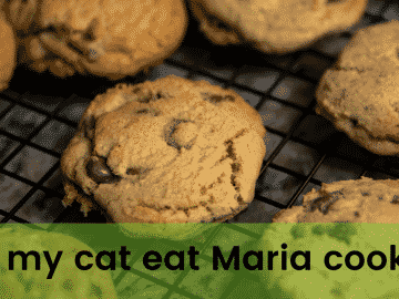 Can my cat eat Maria cookies?