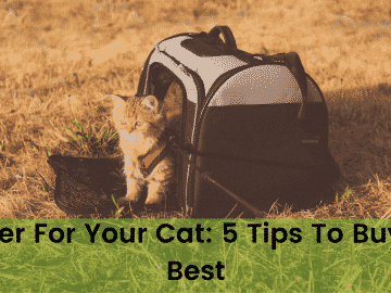 Carrier For Your Cat 5 Tips To Buy The Best