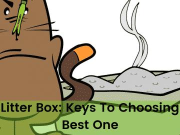 Cat Litter Box Keys To Choosing The Best One