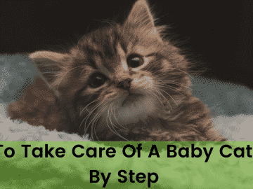 How To Take Care Of A Baby Cat Step By Step