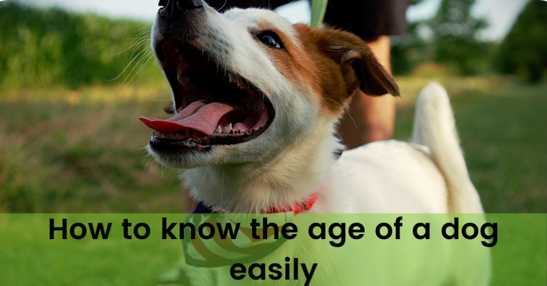How to know the age of a dog easily