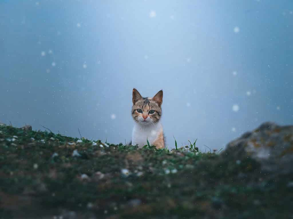 cat playing in the field
