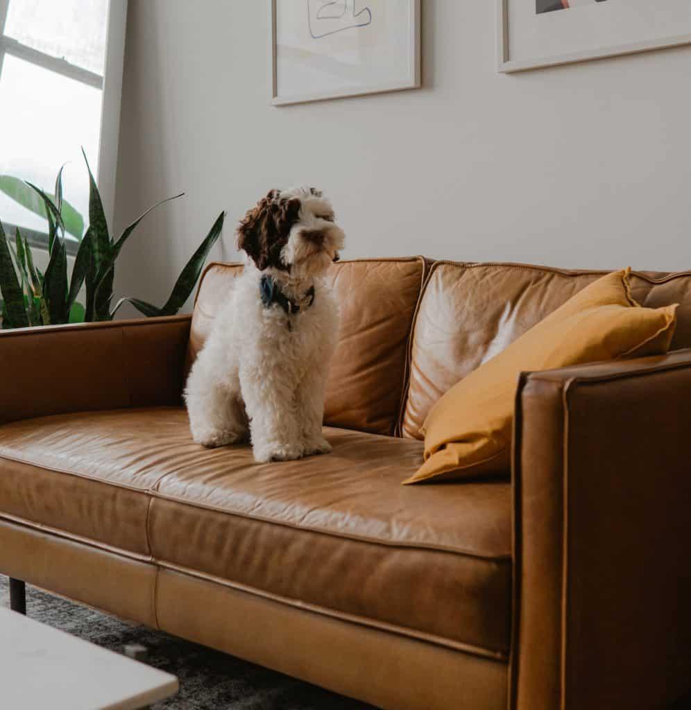 dog at home'