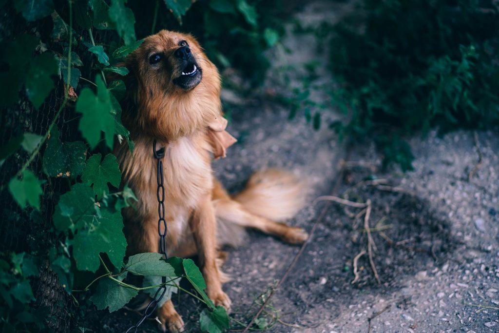dog barking (3)
