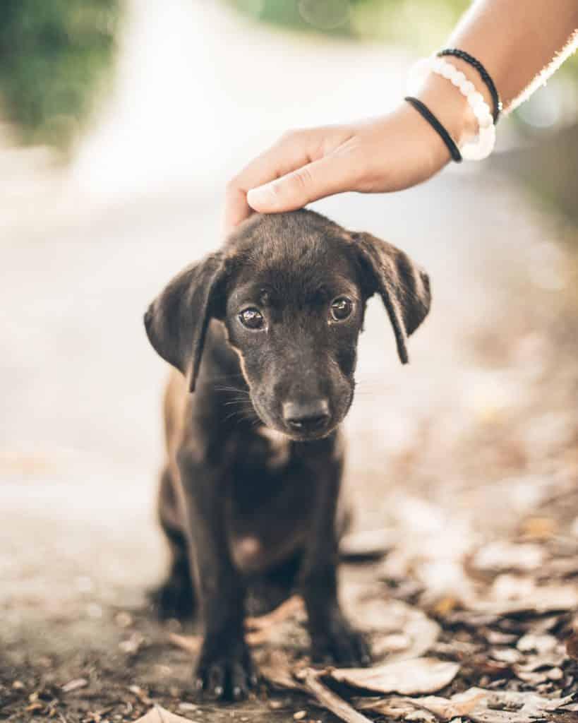 sad looking puppy