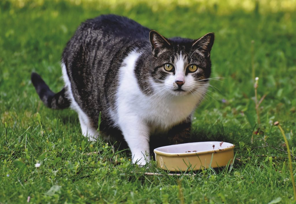 How to recognize high quality wet food for cats