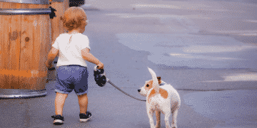 How Often Do You Walk Your Dog